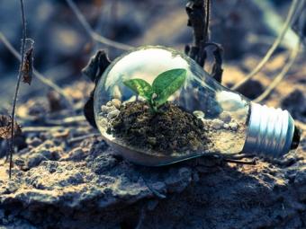 PCM au service de l'environnement - plante dans une ampoule