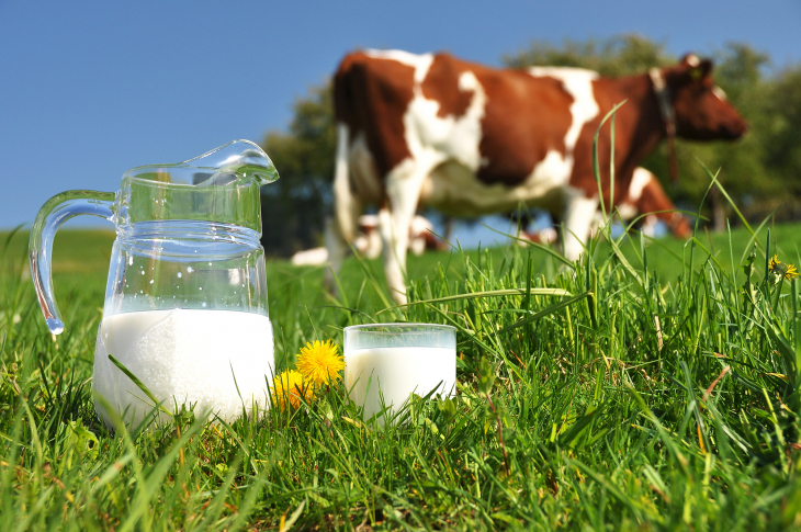 Hygienische Milchsysteme und Pumpen für Förderung, Mischen, Dosieren und Abfüllen.