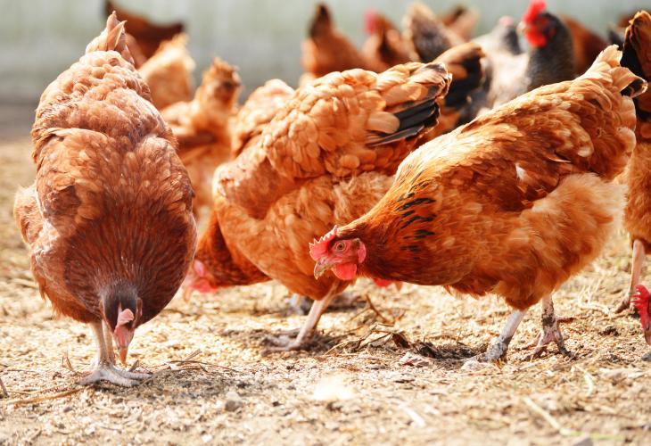 Мясо, рыба и корм для животных